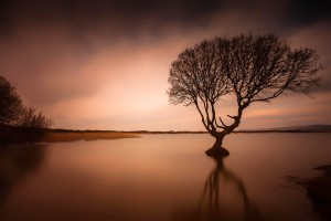 Kenfig pool and tree by Leighton Collins