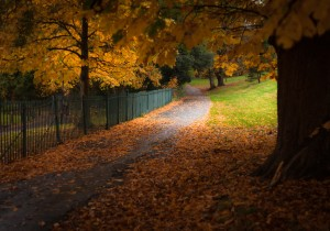 Autumn Leaves by Leighton Collins