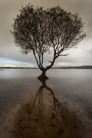 The tree at Kenfig nature reserve near Porthcawl South Wales UK  by Leighton Collins