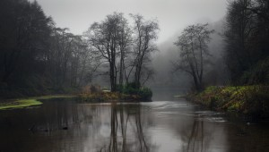 Penllergare Valley Woods upper lake by Leighton Collins