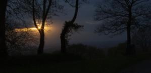 Evening sunburst through the trees by Leighton Collins