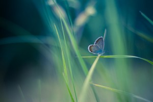 Butterfly summer background by Levente Bodo