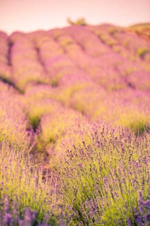 Lavender room spray diamonds roses