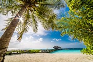 Palm and tropical beach by Levente Bodo