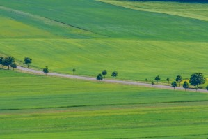 Pastoral green field with long shadows in Hungary by Levente Bodo