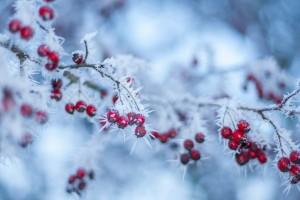 Winter flowers by Levente Bodo