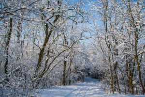 Forest covered with snow by Levente Bodo
