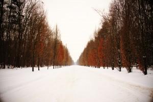 Snowy winter road by Levente Bodo