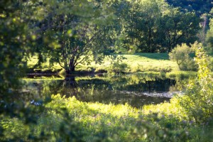 Summer in Glen Sutton by Madame B