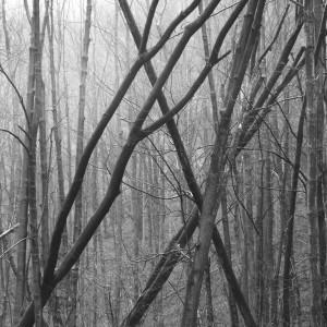 TreeXs by Marcin Lukaszewicz