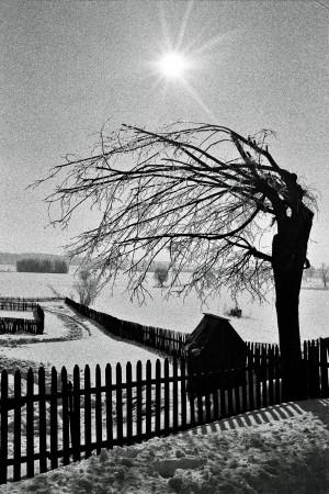 Fence, tree, well by Marcin Lukaszewicz