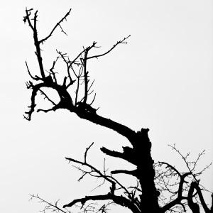 Shadow of the tree by Marcin Lukaszewicz