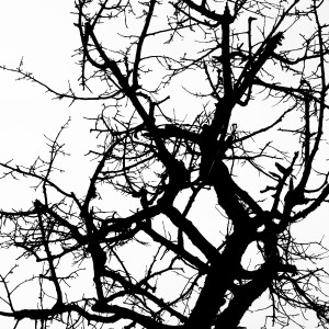 Shadow of the tree II by Marcin Lukaszewicz