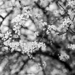 Flowers I by Marcin Lukaszewicz