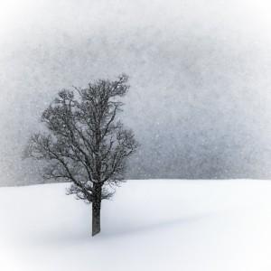 LONELY TREE Idyllic Winterlandscape by Melanie Viola