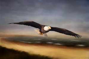 Raptor Skies by Michel Soucy