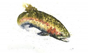 Rainbow Trout by Nicholas Terry