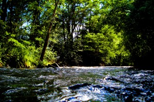 River by P2