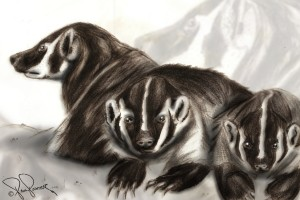 Bold Badgers by P2