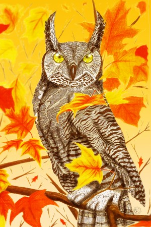 Great Horned Owl by P2