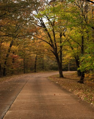 Autumn Drive by Pamela Peters