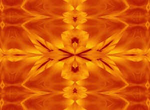 Fire Flowers 117 by Sherrie Larch