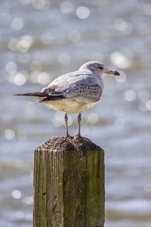 The Seagull by Thomas Vasas