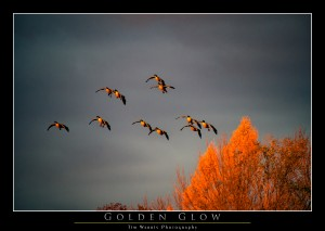 Golden Glow by Tim Warris Photography