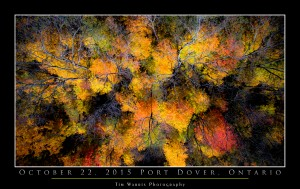 Fall Abstract by Tim Warris Photography
