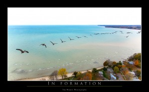 In Formation by Tim Warris Photography