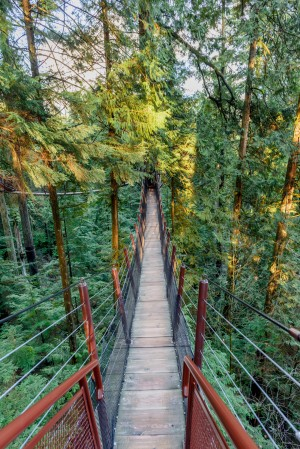 suspension bridge stretching in a dense green jungle above the ground by Viktor Birkus