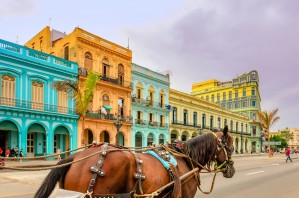 A horse with bells walks along the road on the street of the old town with beautiful, historic buildings by Viktor Birkus