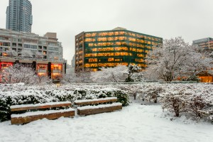 Winter city landscape with bushes and trees covered with snow and glowing windows of skyscrapers by Viktor Birkus