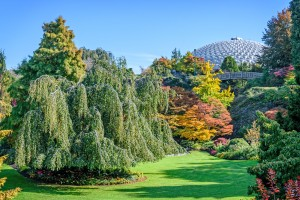 botanical garden with a beautiful landscape, a variety of colorful trees and shrubs, a green lawn by Viktor Birkus