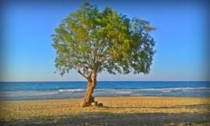 Mediterranean atmosphere near Laguna beach, Greece by Vlad Radulian