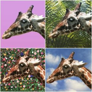 4 Giraffes  by Wallshazam
