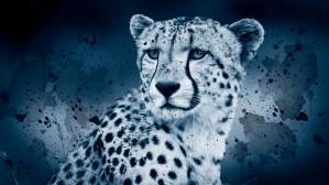 WINTER by inXS Wildlife