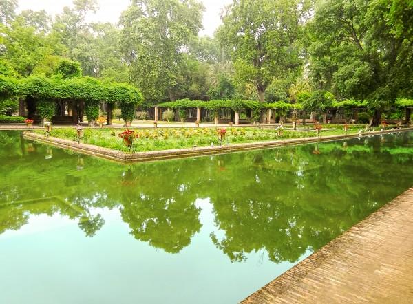 Lotos Pond - Estanque de Los Lotos - Parque de Maria Luisa - Seville Spain Digital Download