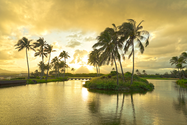 Shadows and Light as the Sun Sets in Kauai 2 of 2 Digital Download