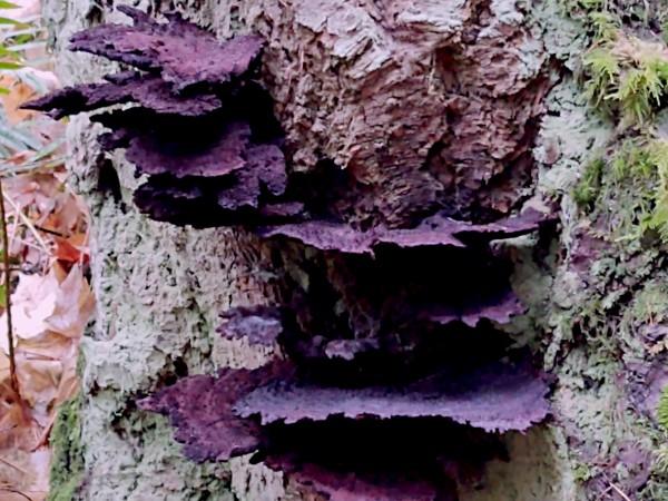 Tiny World 8 of 8 - Mushrooms and Fungi Digital Download