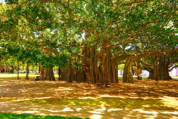 Waikiki Snapshot in Time 4 of 4 Digital Download