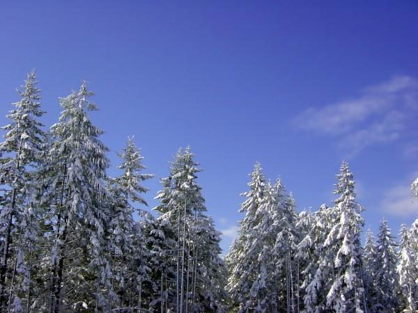 First Snow Digital Download
