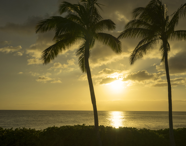 Golden Rays of the Sun Through the Palms at Sunset by 360 Studios