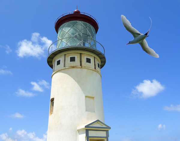 Kilauea Lighthouse and Wildlife Refuge on Kauai Digital Download