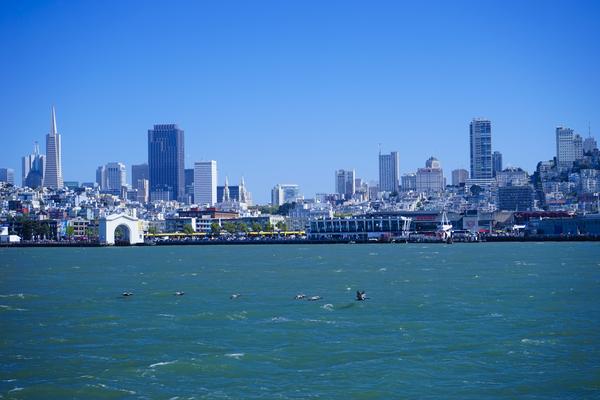 Pelicans in the Bay   San Francisco by 360 Studios