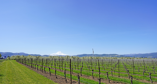Spring in Hood River Valley   Oregon Columbia Gorge by 360 Studios