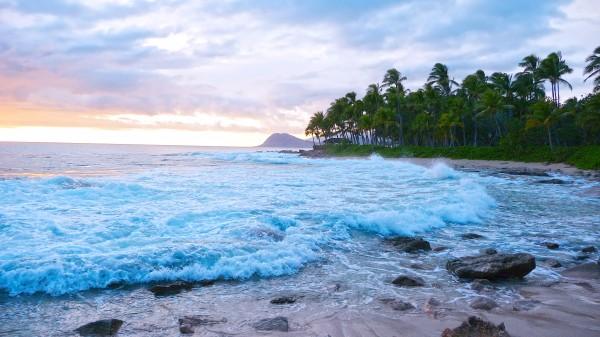 Untamed Hawaii Digital Download