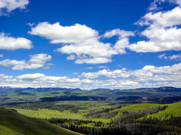 Vintage Back Country Wyoming   Yellowstone National Park in the United States by 360 Studios