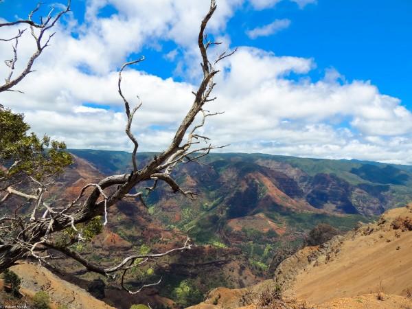 Wild Kauai 2 Digital Download