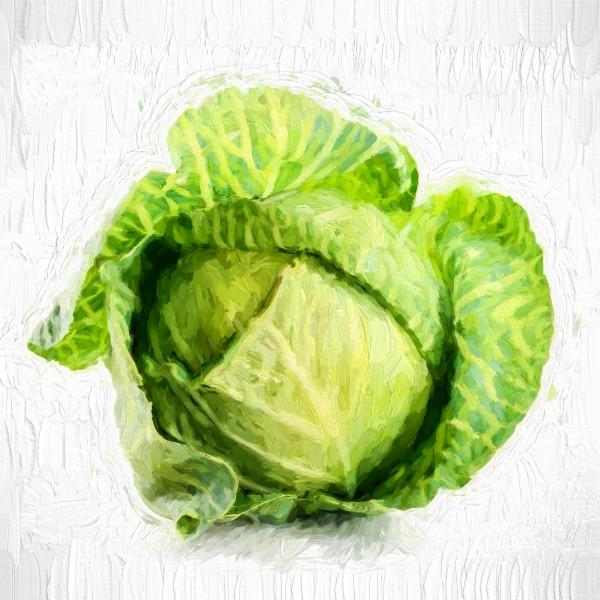 Cabbage by A WYN CHANCE